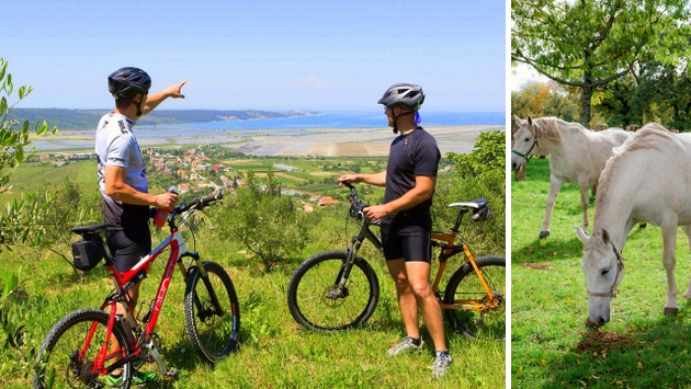 Slovenia bike tour - Trieste bay and Lipica