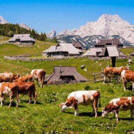Casas de pastores-Velika planina-Eslovenia-con Ekorna