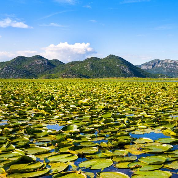 Lagos bonitos de los Balcanes-lago Skadar