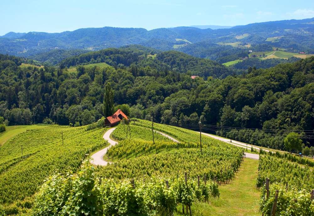 Slovenia, heart, wine, road, www.slovenia.info, Nea Culpa-''camino-del-corazón''-entre-los-viñedos